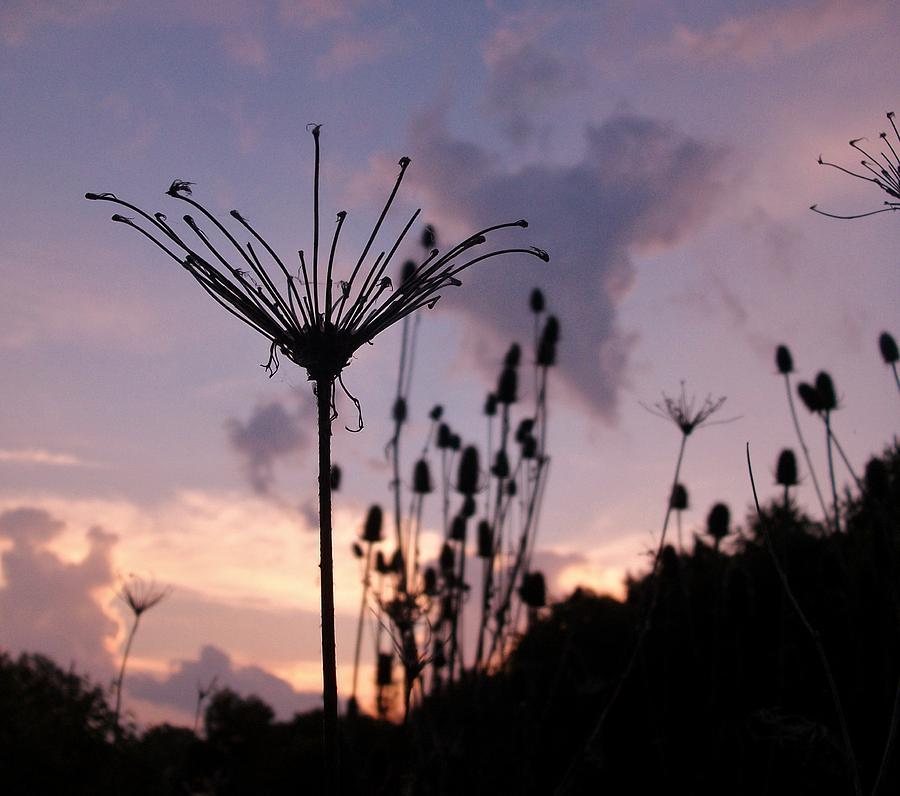 Umbrella Photograph - Umbrella In The Wind 2 by Elizabeth Sullivan