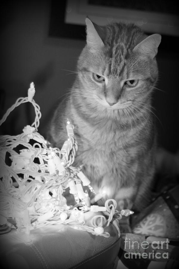 Cat Photograph - Unamused by Barbara Bardzik