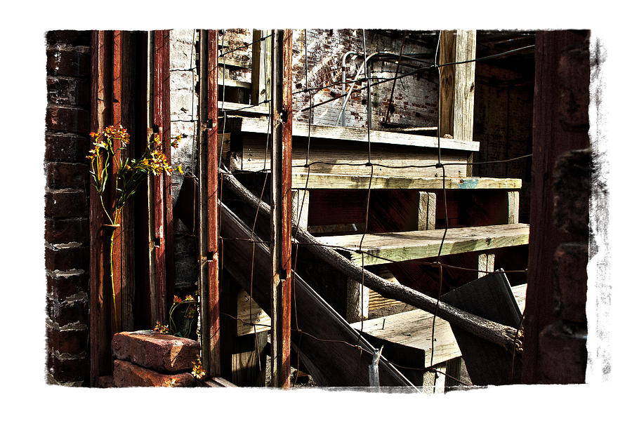 Rustic Photograph - Uncommon Beauty by Tanya Jacobson-Smith