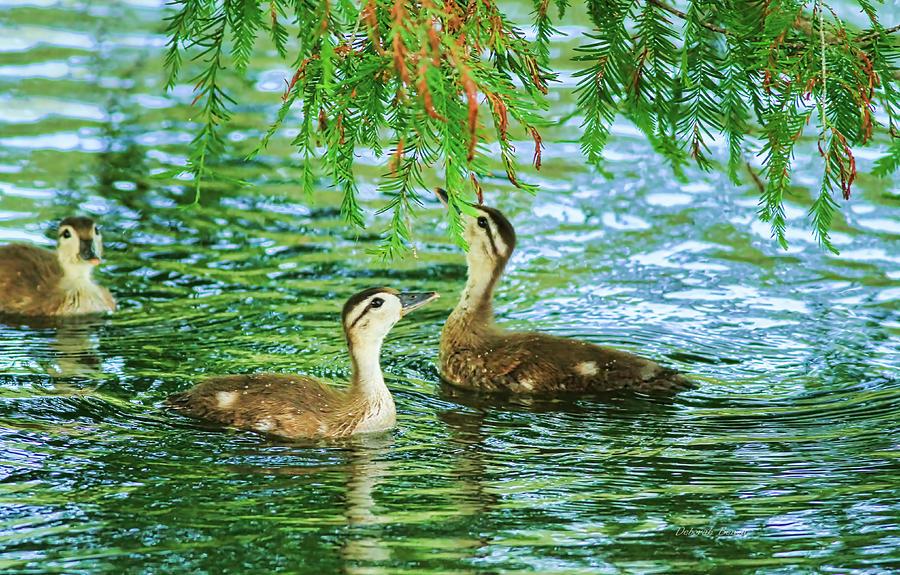 Wood Ducks Photograph - Under The Canopy by Deborah Benoit