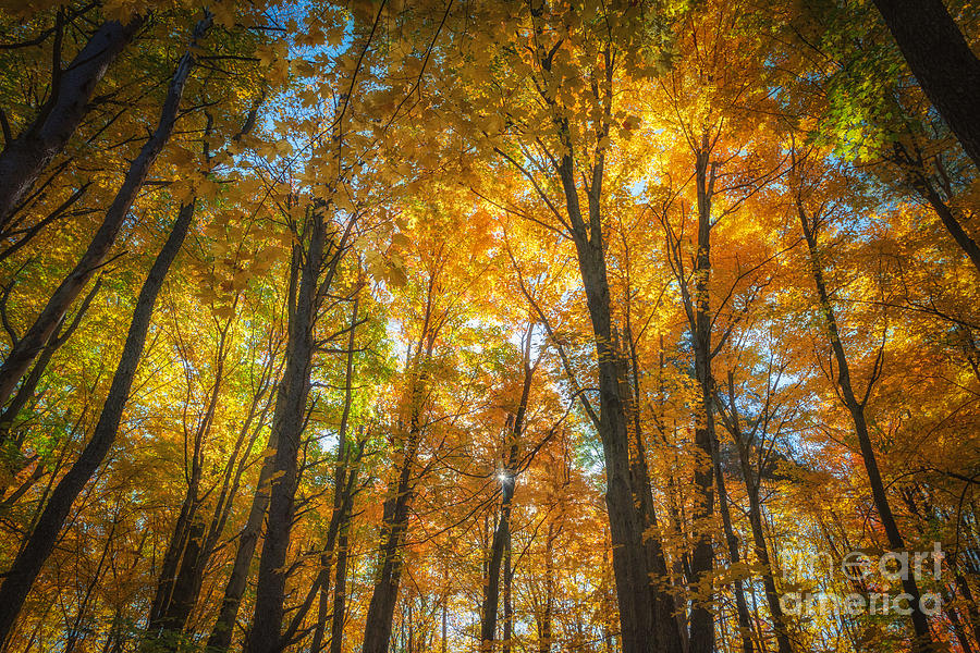 Under the Golden Canopy by Sophie Doell