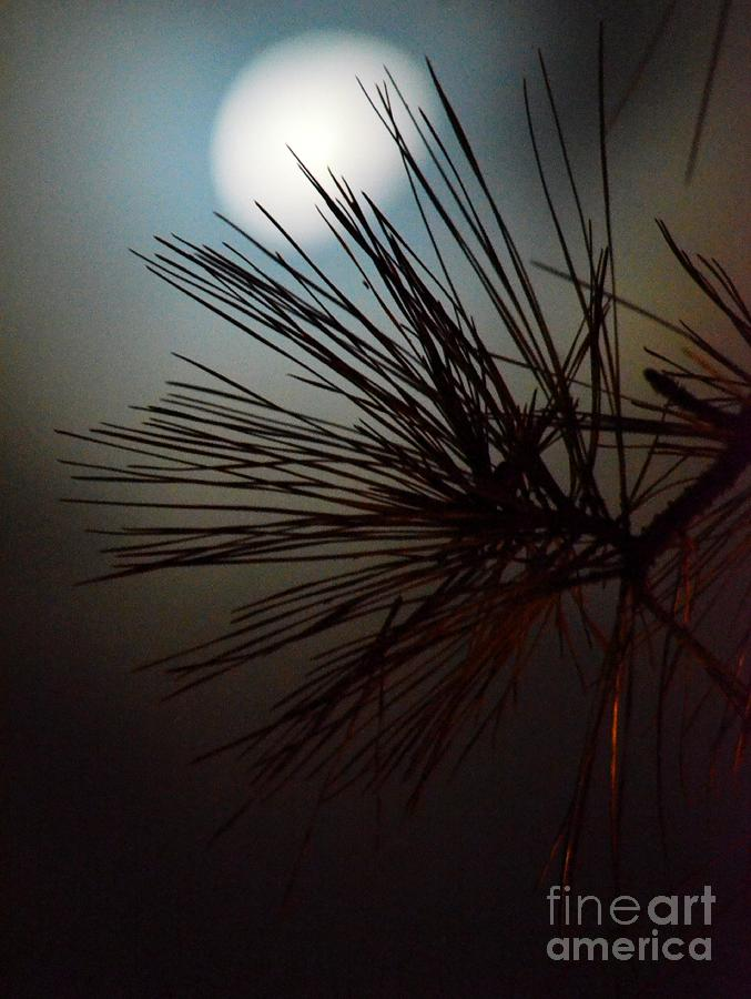 Under The Moon Ii Photograph - Under The Moon II by Maria Urso