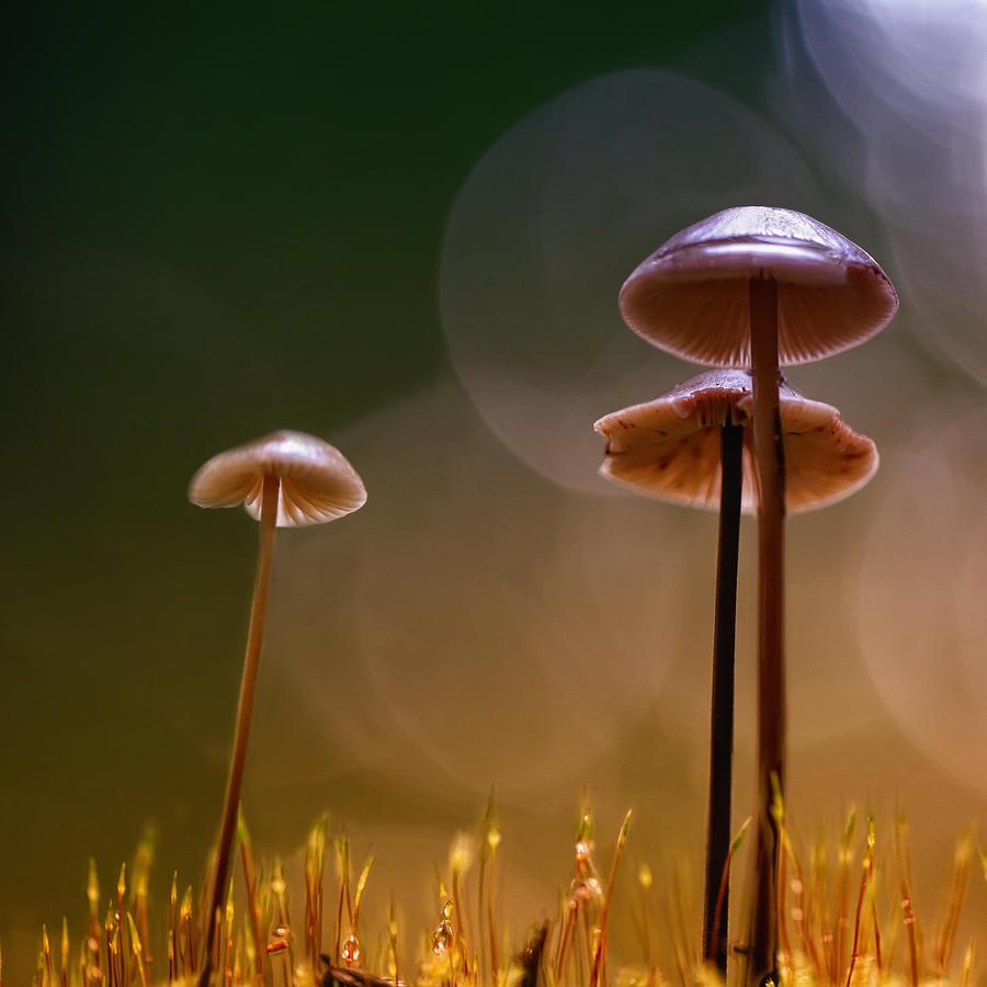 Mushroom Photograph - Under The Mushroom by Kent Mathiesen