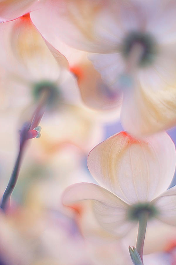 Flower Photograph - Under The Skirts Of Flowers by Francois Casanova
