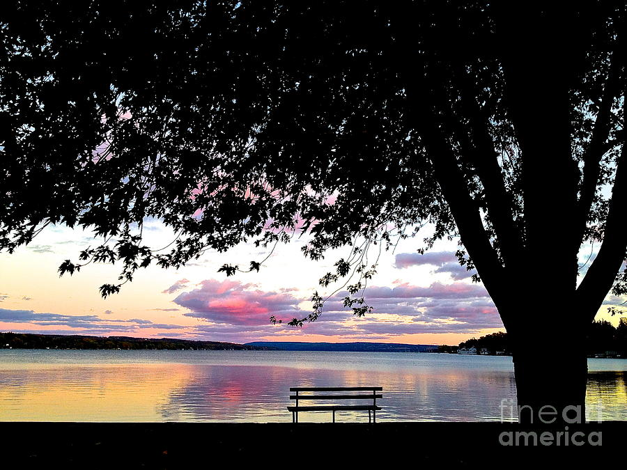 Skaneateles Lake Photograph - Under The Tree by Margie Amberge