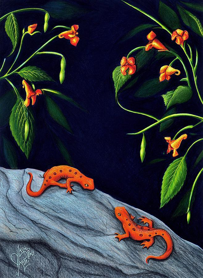 Salamanders Drawing - Understory by Danielle R T Haney