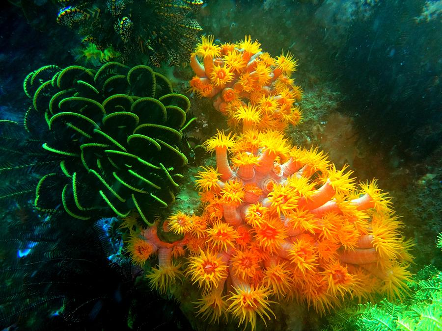 Diving Photograph - Underwater Colourful Garden 2 by Mangin Jean