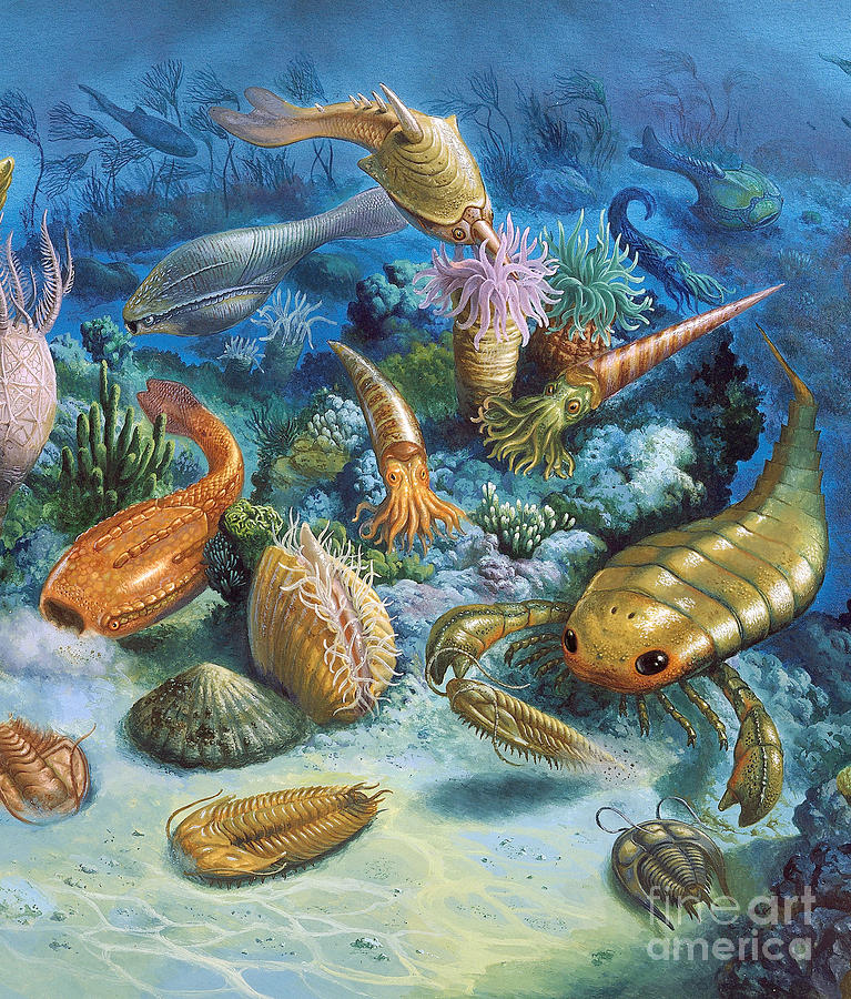 Underwater Life During The Paleozoic Photograph by Publiphoto