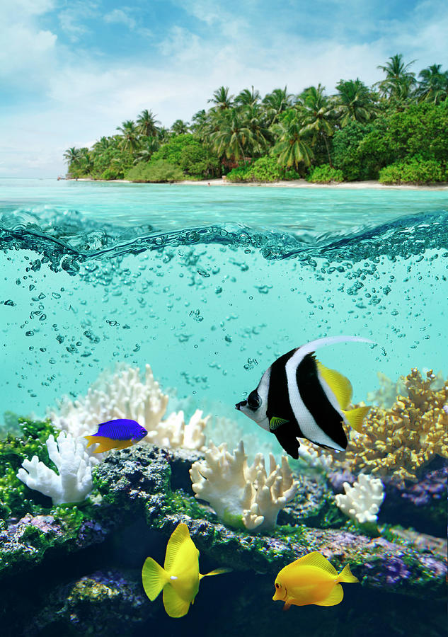 Underwater Life In Tropical Sea Photograph by Narvikk