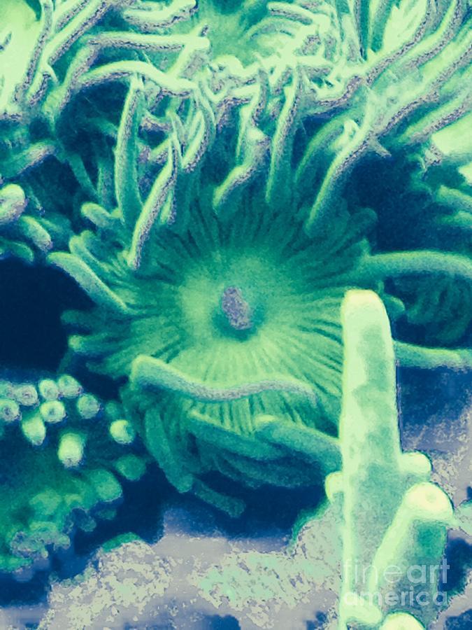 Underwater Plant Life Photograph - Underwater Life by Marlene Williams