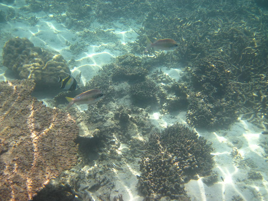 Phi Photograph - Underwater - Long Boat Tour - Phi Phi Island - 011377 by DC Photographer