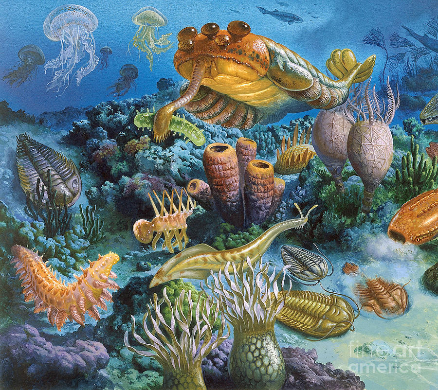 Underwater Paleozoic Landscape Photograph by Publiphoto