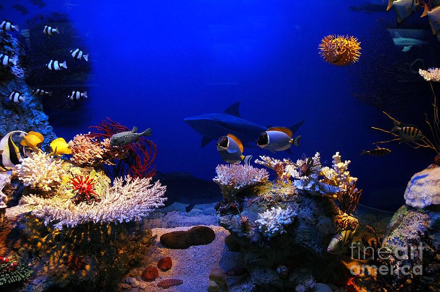Animal Photograph - Underwater Scene by Michal Bednarek