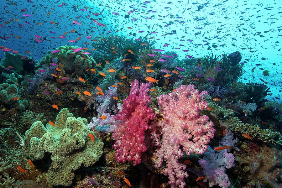 Underwater Scenic Photograph by Stephen Frink
