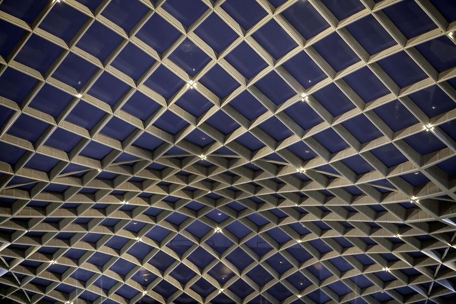 Canopy Photograph - Undulating by Lynn Palmer