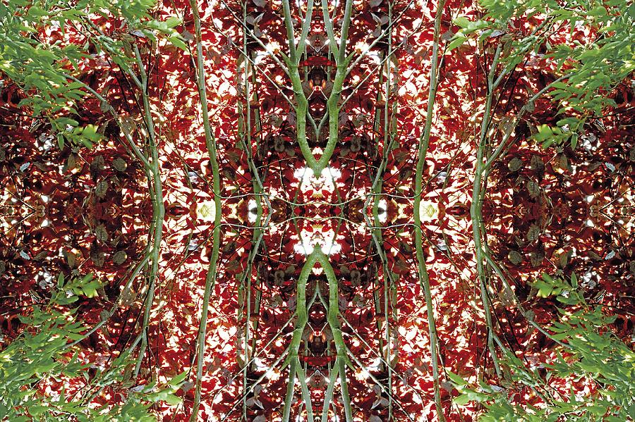 Kaleidoscopic Photograph - Unnatural 23 by Giovanni Cafagna