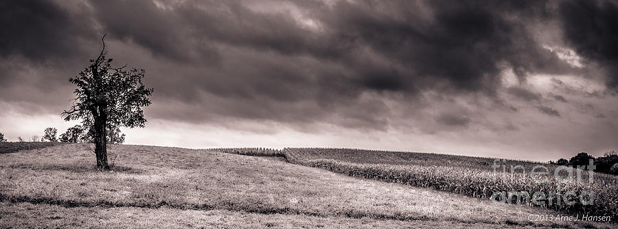 Agricultural Photograph - Untitled 510 by Arne Hansen