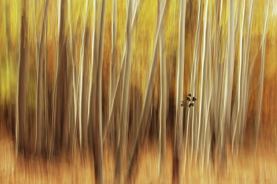 Yellow Photograph - Untitled by Amir Hossein Shojaii