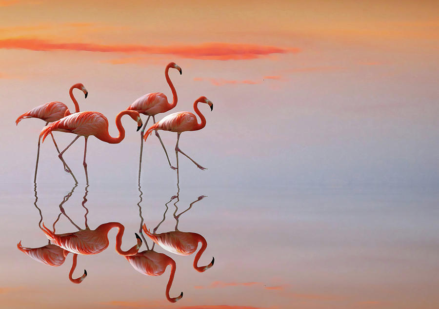 Animals Photograph - Untitled by Anna Cseresnjes