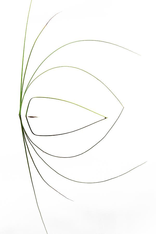 Grass Photograph - Untitled by Dirk Heckmann