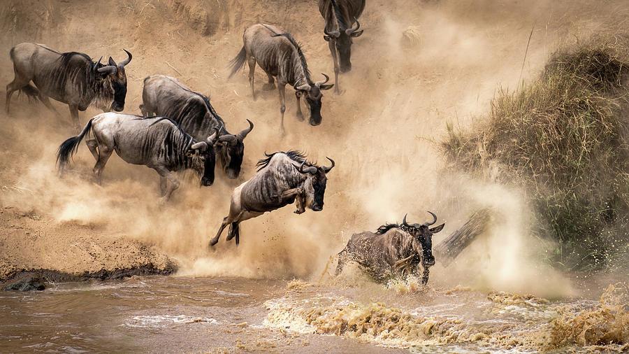 Wildebeest Photograph - Untitled by Henrike Scheid
