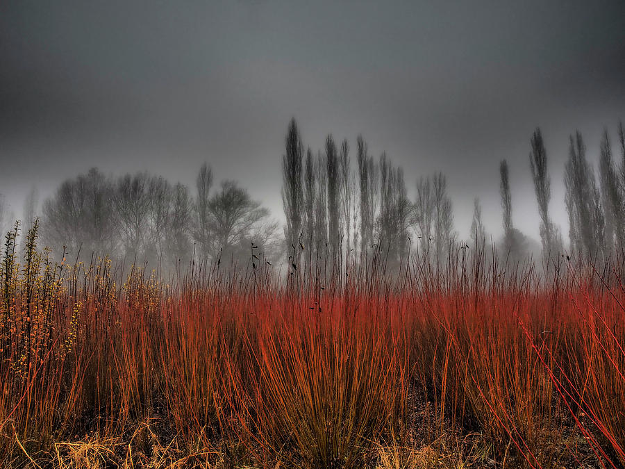 Grass Photograph - Untitled by Ja Ruiz Rivas
