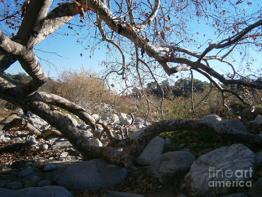 Riverbed Photograph - Untitled Photograph 2 by Drew Shourd