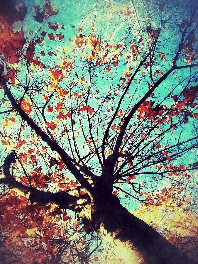 Tree Painting - Untitled Tree Web by Juliann Sweet