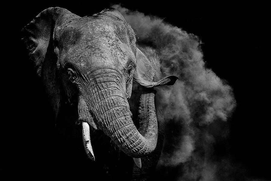Elephant Photograph - Untitled by Vedran Vidak