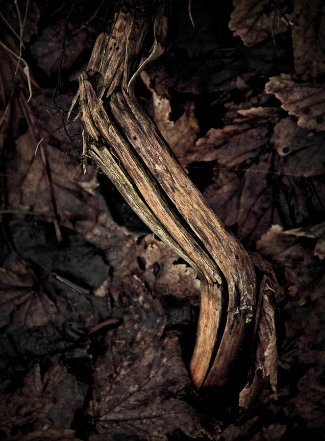 Root Photograph - Untouchable by Odd Jeppesen