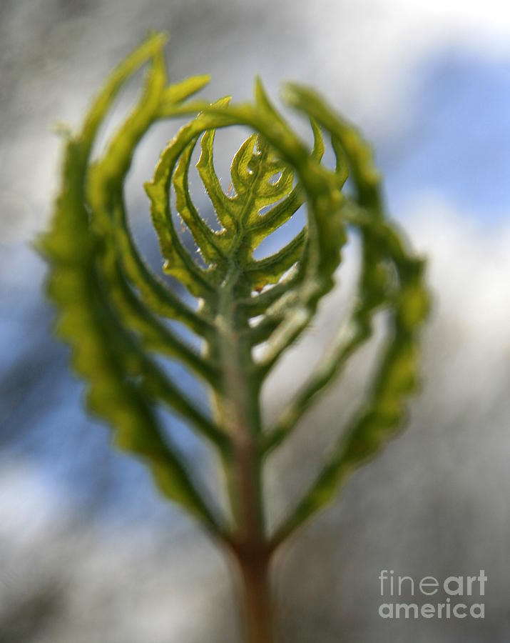 Fern Photograph - Unwrapped by Neal Eslinger
