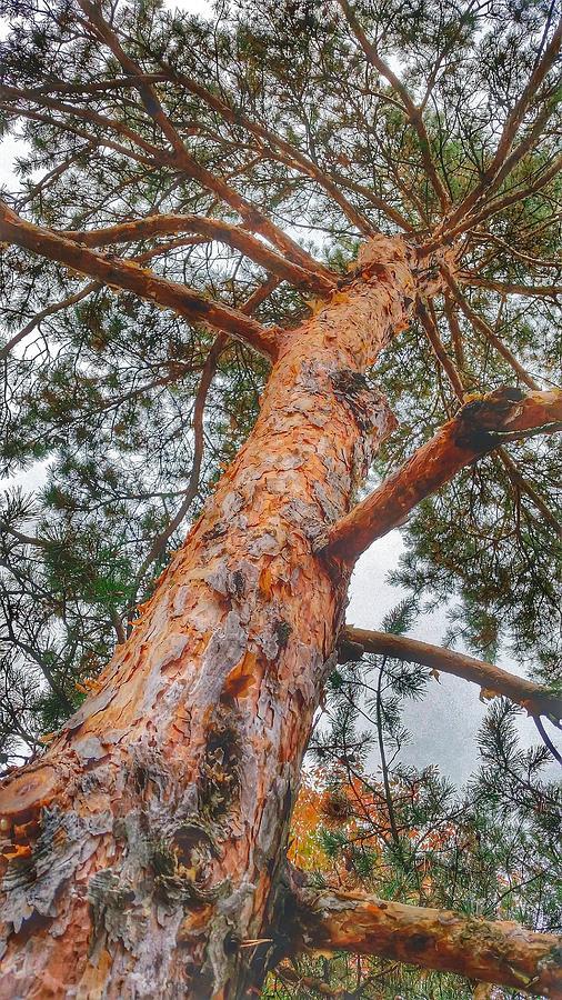 Fall Photograph - Up A Tree by Tom Kiebzak
