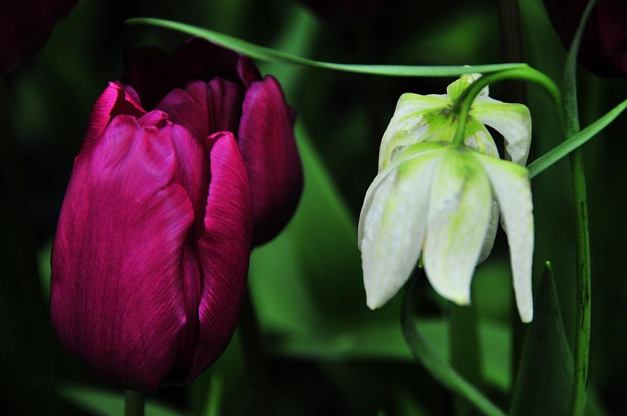 Flowers Photograph - Up And Down by Mike Martin
