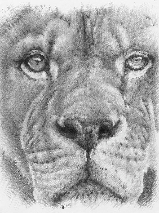 Big Cat Drawing - Up Close Lion by Barbara Keith