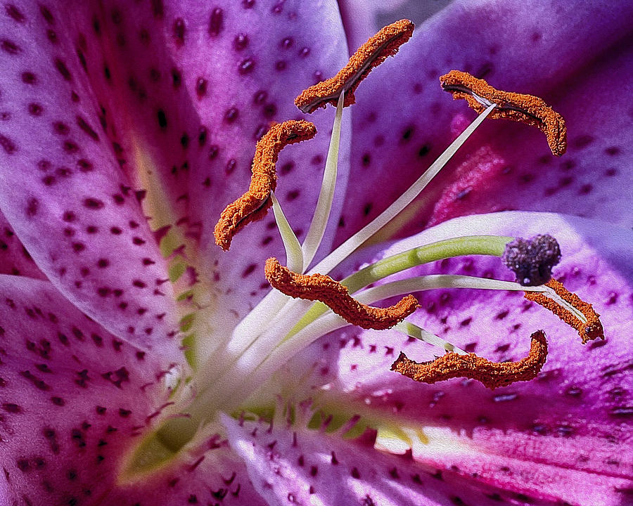 Lily Photograph - Up Close by Wayne Wood