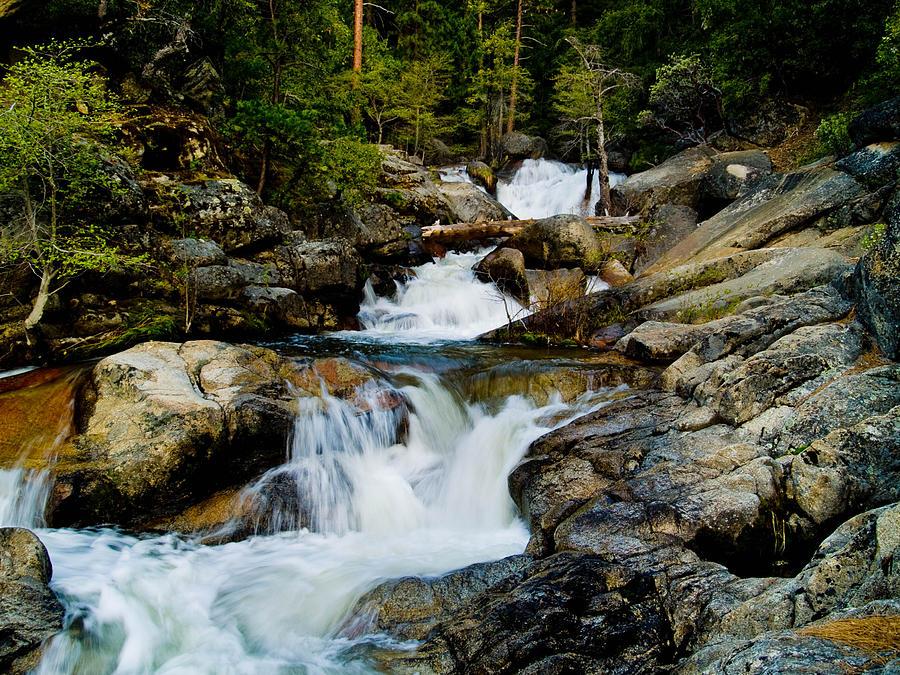 Cascade Creek Photograph - Up The Creek by Bill Gallagher