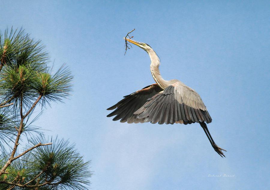 Blue Heron Photograph - Up To The Nest by Deborah Benoit