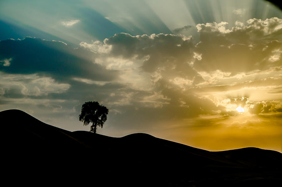 Uplifting Soul of Life Photograph by S M  Hasan