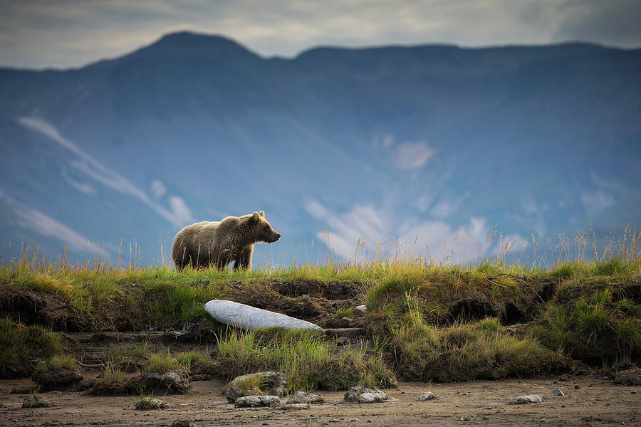 Upon The Bluff Photograph by Chase Dekker Wild-life Images