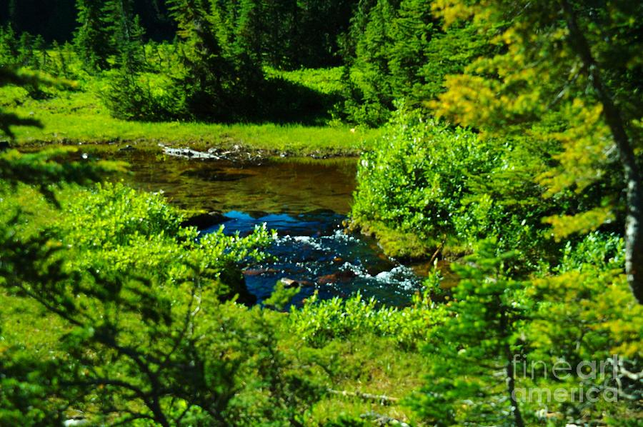 Creeks Photograph - Upper Dewey Creek by Jeff Swan