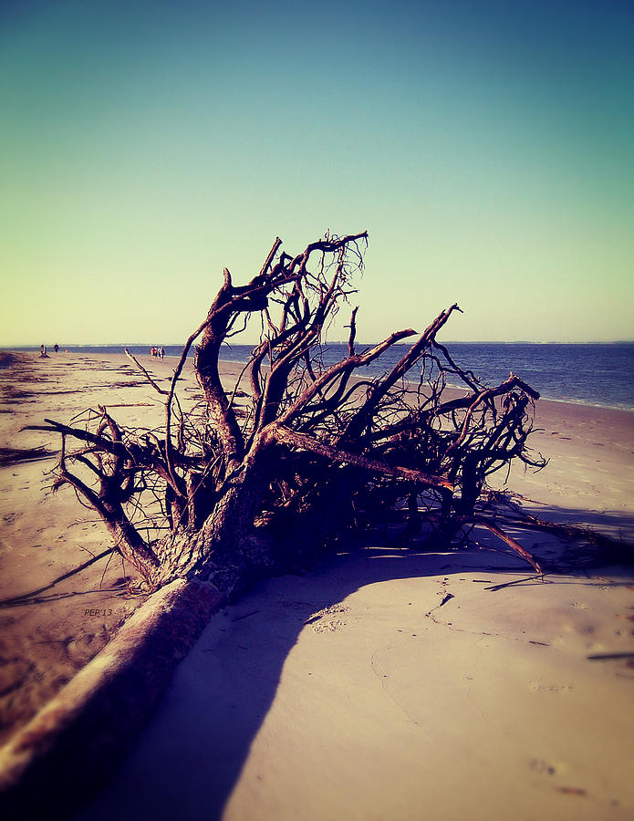 Photograph Photograph - Uprooted Tree On The Beach by Phil Perkins