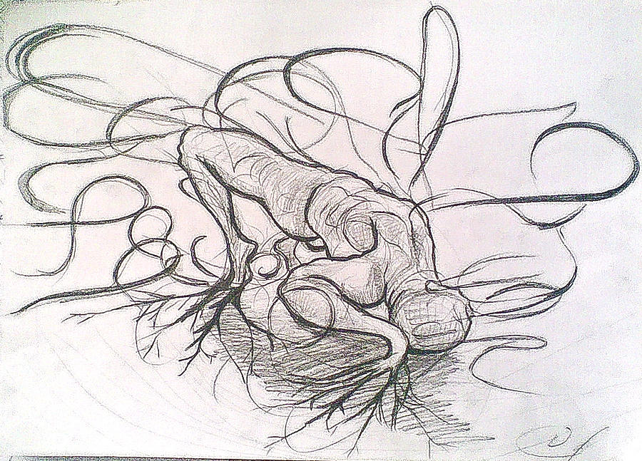 Uprooting Drawing by Vaidos Mihai