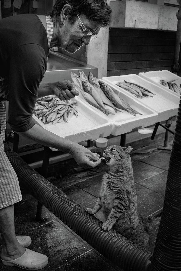 Cat Photograph - Urban  Cats !! by Fernando Jorge Gon?alves