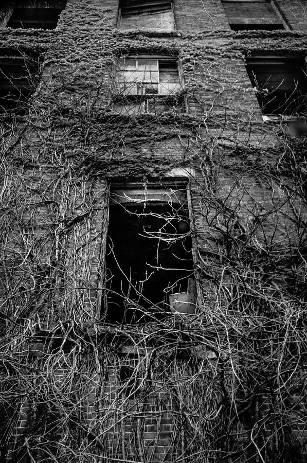 Vines Photograph - Urban Decay by David Pinsent