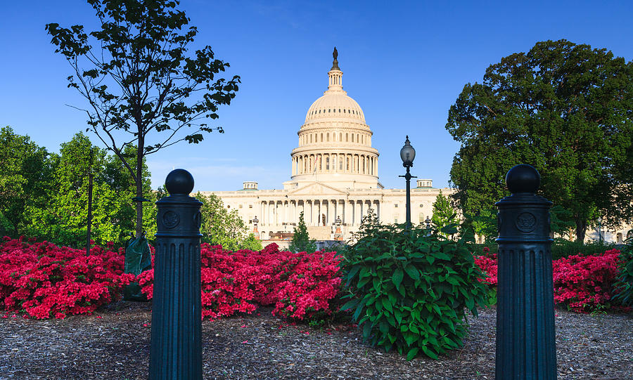 Us Capitol Photograph - Us Capitol And Red Azaleas by Carol VanDyke