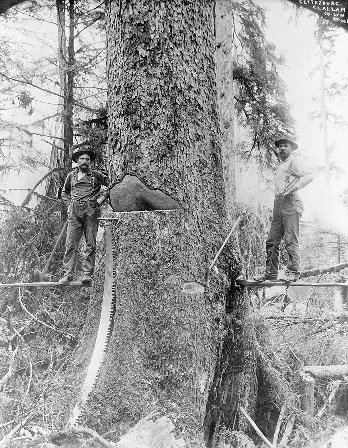 Human Photograph - Us Forestry by Library Of Congress