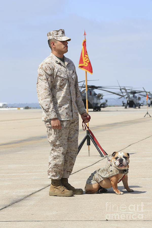 Platoon Photograph - U.s. Marine And The Official Mascot by Stocktrek Images