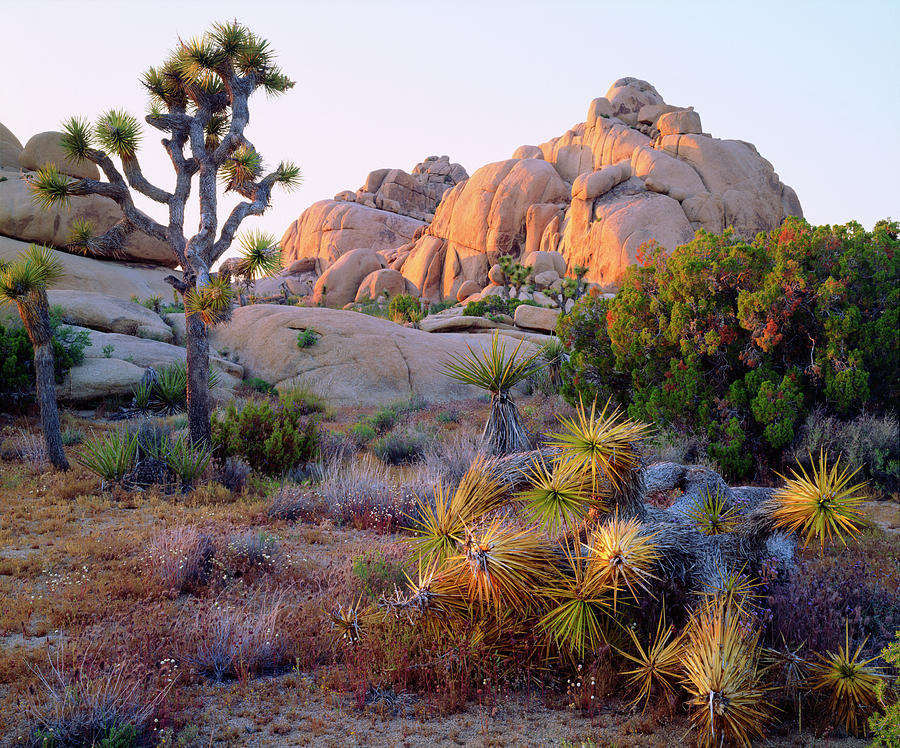 Abundance Photograph - Usa, California, Joshua Tree National by Jaynes Gallery