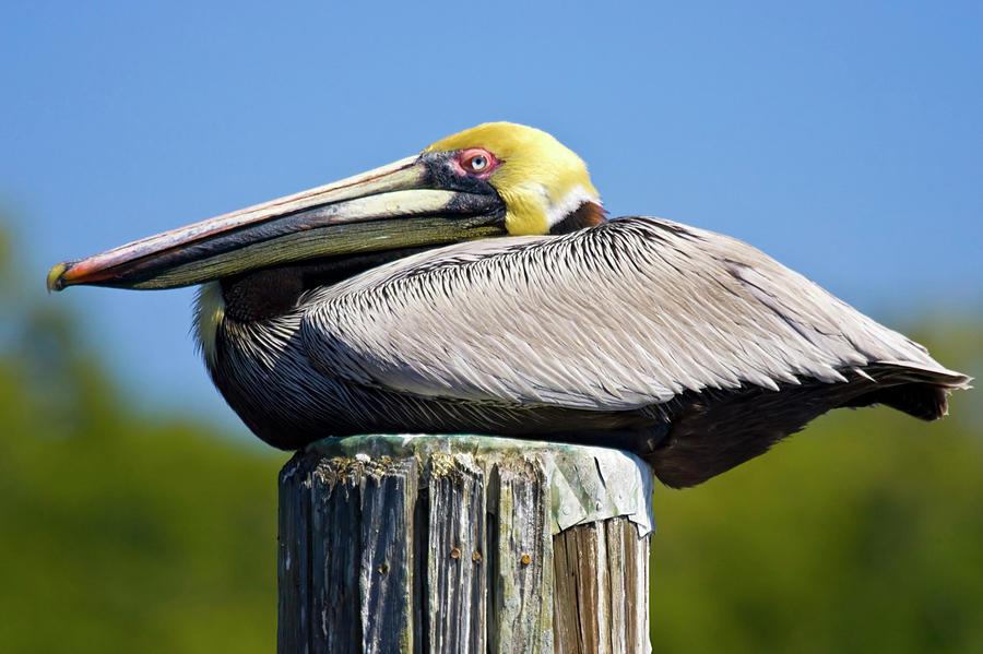 Animal Photograph - Usa, Florida, Everglades City, Big by Jaynes Gallery