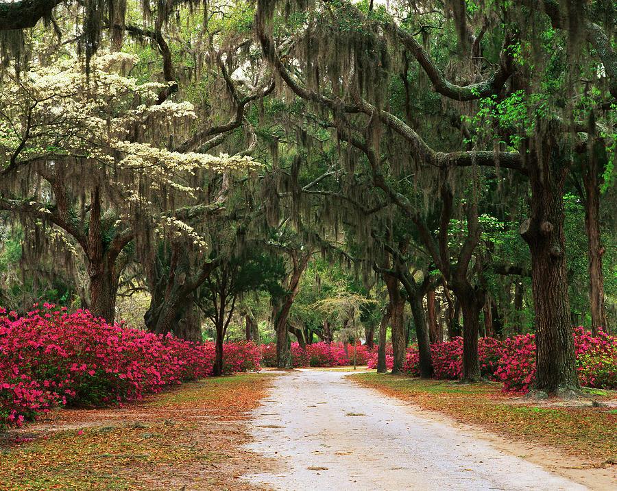 Absence Photograph - Usa, Georgia, Savannah, Road Lined by Adam Jones